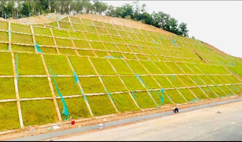 Ứng dụng giải pháp xanh trong phòng chống sụt trượt bờ dốc