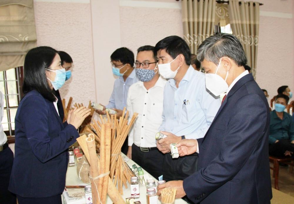 Ký kết hợp tác bao tiêu sản phẩm quế hữu cơ cho nông dân Quảng Trị