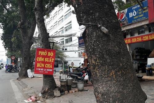 Ngăn chặn các hành vi xâm hại cây xanh: Bắt đầu từ ý thức người dân