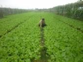 Nâng cao hiệu quả kinh tế từ chuyển đổi cơ cấu cây trồng