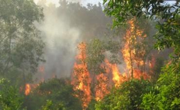 Đẩy mạnh công tác phòng cháy, chữa cháy rừng