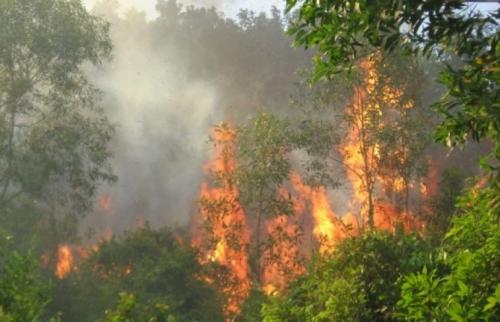 Chủ động triển khai các biện pháp phòng chống cháy rừng