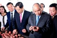Lô hàng rau quả đầu tiên xuất khẩu đi Nhật Bảnnăm 2019