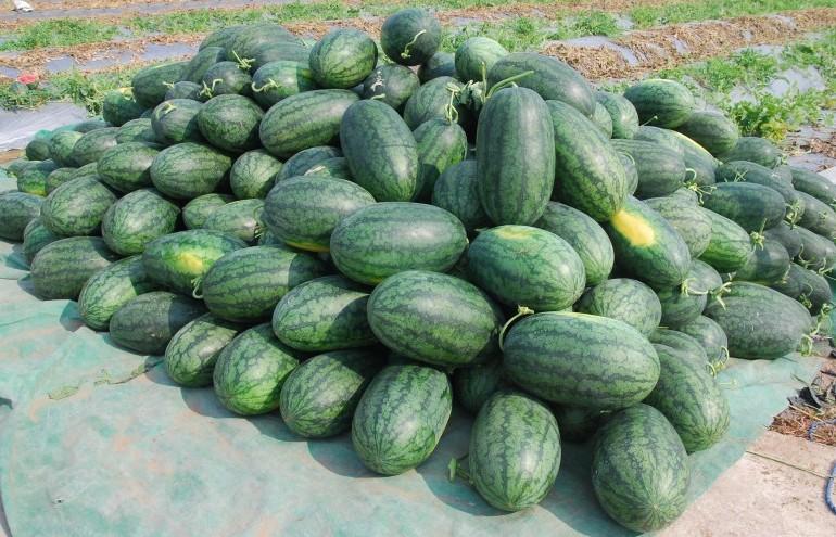 Tìm giải pháp cho nông sản Việt giữa đại dịch Corona