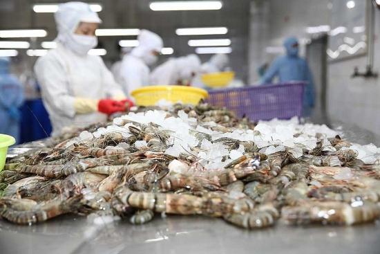Tôm xuất khẩu từ Công ty Minh Phú sẽ không bị áp thuế phá giá vào Hoa Kỳ