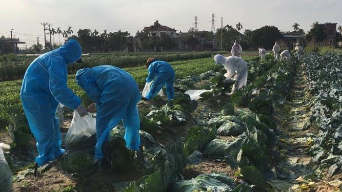 Bộ Công Thương nỗ lực tháo gỡ khó khăn cho nông sản các tỉnh vùng dịch
