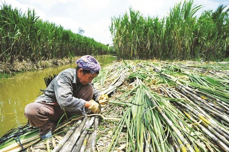 Sau áp thuế chống bán phá giá tạm thời: Đường nhập khẩu Thái Lan vẫn ồ ạt vào Việt Nam