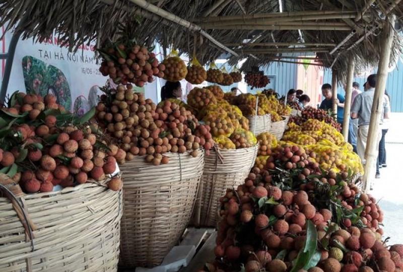 Khai mạc Tuần lễ vải thiều Lục Ngạn - Bắc Giang tại Hà Nội