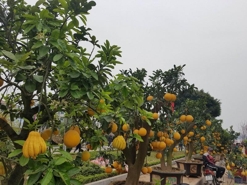85 thương hiệu vàng nông nghiệp được  vinh danh