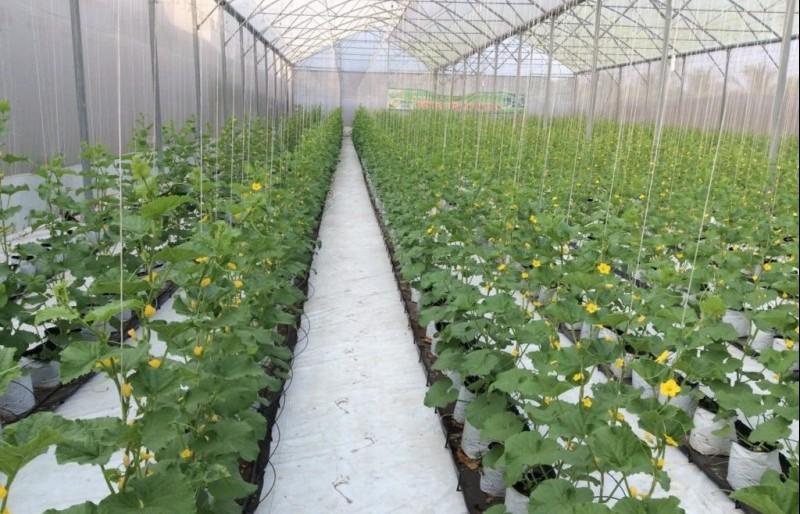 Huyện Ứng Hòa: Đẩy mạnh ứng dụng khoa học công nghệ vào sản xuất