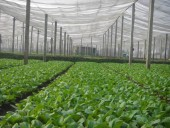 Chi cục bảo vệ thực vật Hà nội ký cam kết kiểm soát rau an toàn