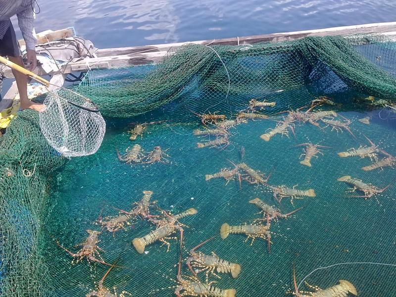 Chấn động tại Tổng cục Thủy sản: 800 sản phẩm 'khống' giấy phép