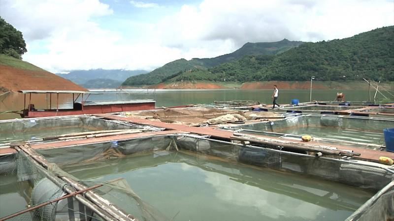 Cá sông Đà lần đầu 'tấn công' thị trường Hà Nội