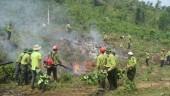 Chủ động phòng cháy, chữa cháy rừng trong thời điểm nắng nóng