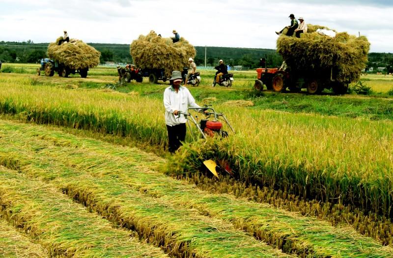 Mùa thu cách mạng và những suy nghĩ về nền nông nghiệp Việt Nam