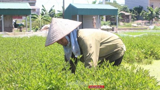 """Chủ động nguồn nguyên liệu sản xuất và tìm đầu ra cho sản phẩm """"vùng xanh"""""""