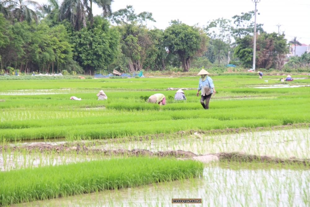 Để nông dân được thụ hưởng xứng đáng trong chuỗi giá trị