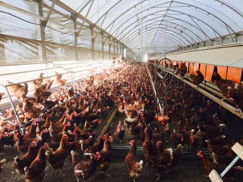 Đơn giản hóa thủ tục, doanh nghiệp ngành nông nghiệp tiết kiệm hàng nghìn tỉ đồng