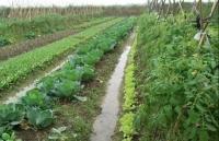 Huyện Thạch Thất (Hà Nội): Chú trọng phát triển mô hình nông nghiệp công nghệ cao