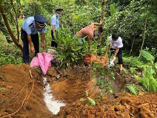 Hà Giang: Tiêu hủy trên 100 tấn lợn nhiễm dịch tả lợn châu Phi