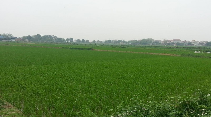 """Thanh Oai: Nỗ lực """"cán đích"""" xây dựng nông thôn mới"""
