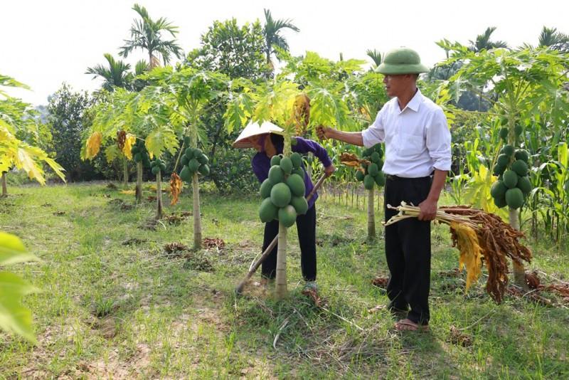 Huyện Sóc Sơn: Tích cực chuyển đổi cơ cấu cây trồng vật nuôi