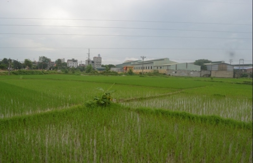 Huyện Sóc Sơn: Đẩy mạnh áp dụng công nghệ cao vào sản xuất nông nghiệp