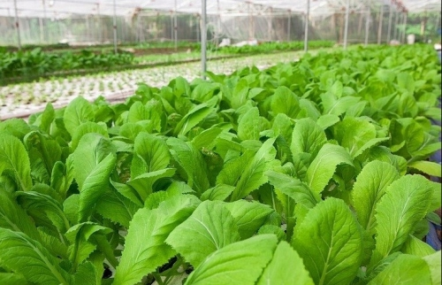 Nâng cao kỹ năng sản xuất an toàn cho nông dân