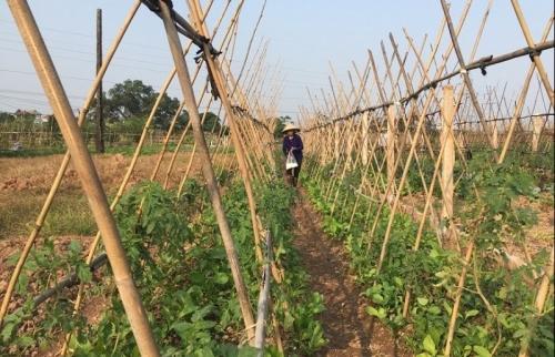 Tuyên truyền tốt giúp Quốc Oai sớm hoàn thành xây dựng nông thôn mới