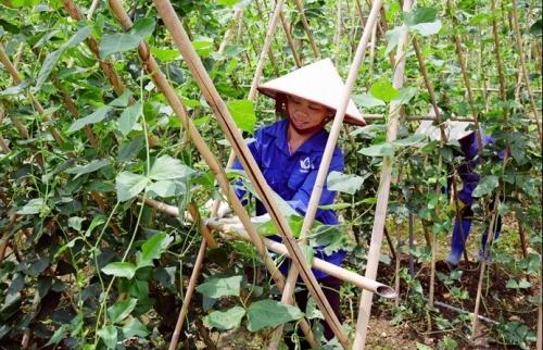 Nâng cao chất lượng đời sống văn hóa của người dân nông thôn