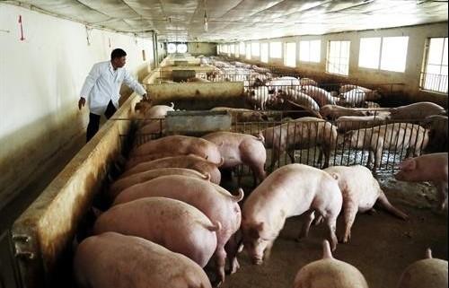 Hiệu quả từ các mô hình chăn nuôi, nuôi trồng thủy sản