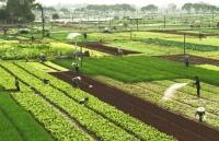 Điểm sáng từ các vùng sản xuất nông nghiệp có giá trị kinh tế cao