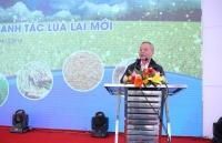 Ra mắt mô hình lúa lai mới đầu tiên tại Việt Nam