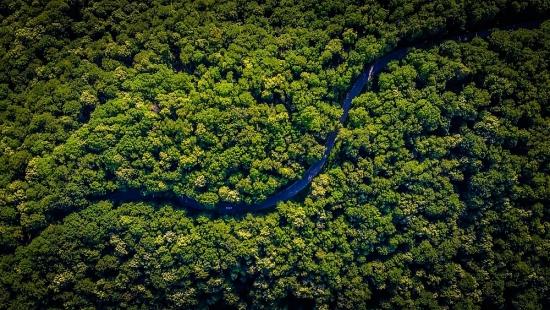Tetra Pak được xếp hạng A cho hạng mục chống biến đổi khí hậu và bảo vệ rừng trên toàn cầu