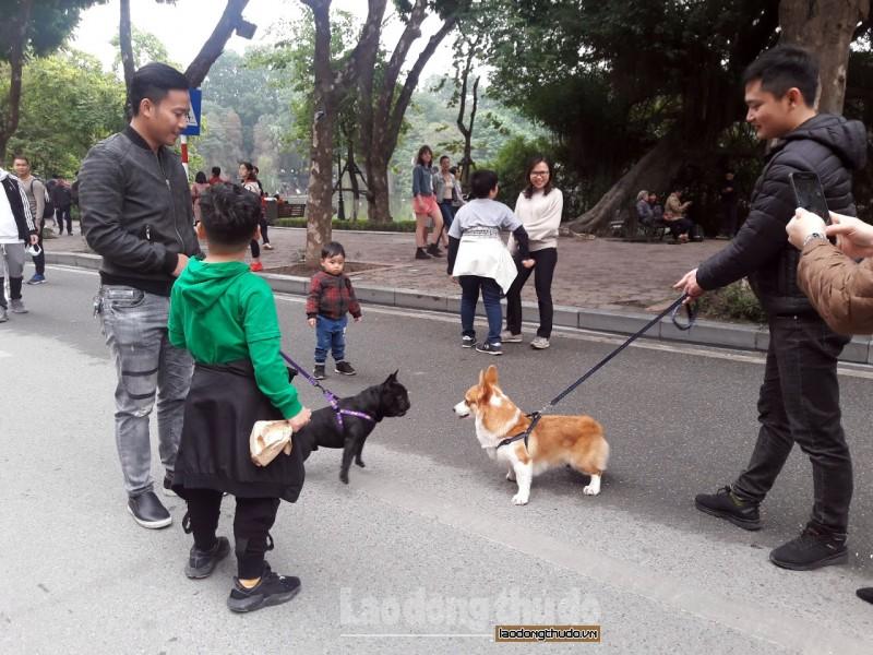 Vẫn vô tư dắt chó không rọ mõm đi dạo