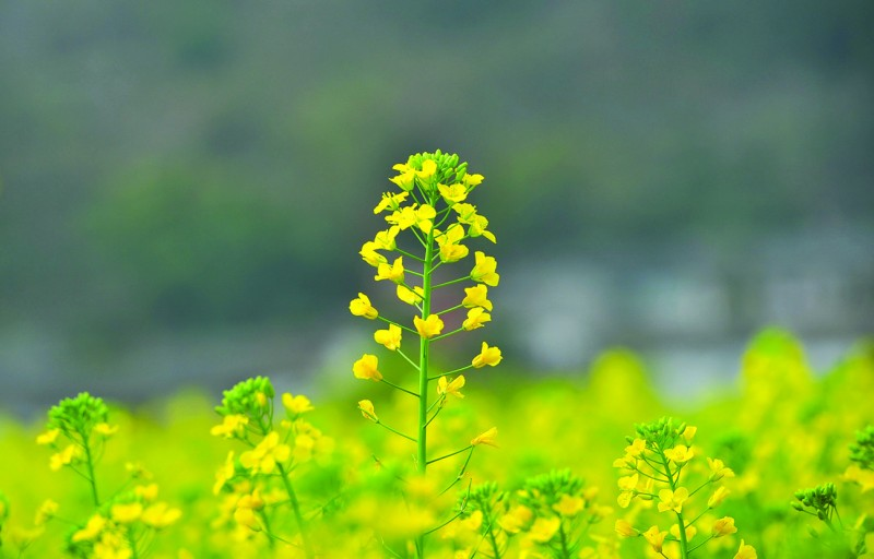 nhung doa hoa bao xuan