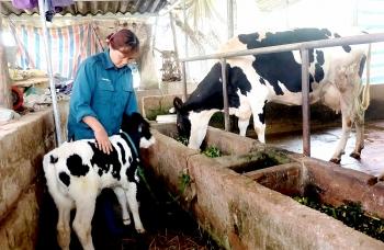 Chủ động chống rét cho cây trồng, vật nuôi