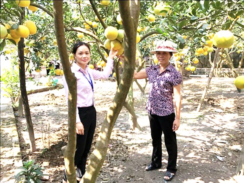 Tạo các vùng cây ăn quả mang lại giá trị cao