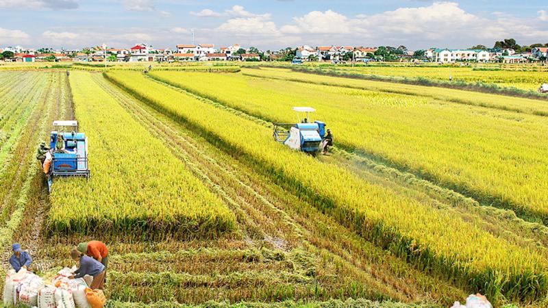 An ninh lương thực: Cùng giải bài toán tương lai