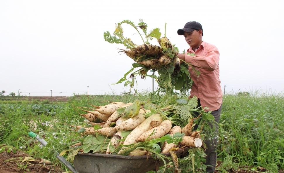 Rộng mở cho xuất khẩu nông sản