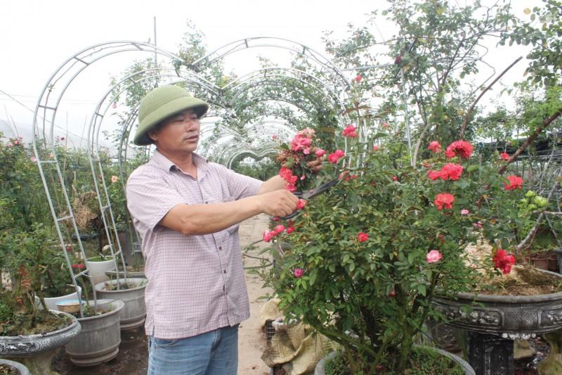 Làm giàu từ nghề trồng hoa