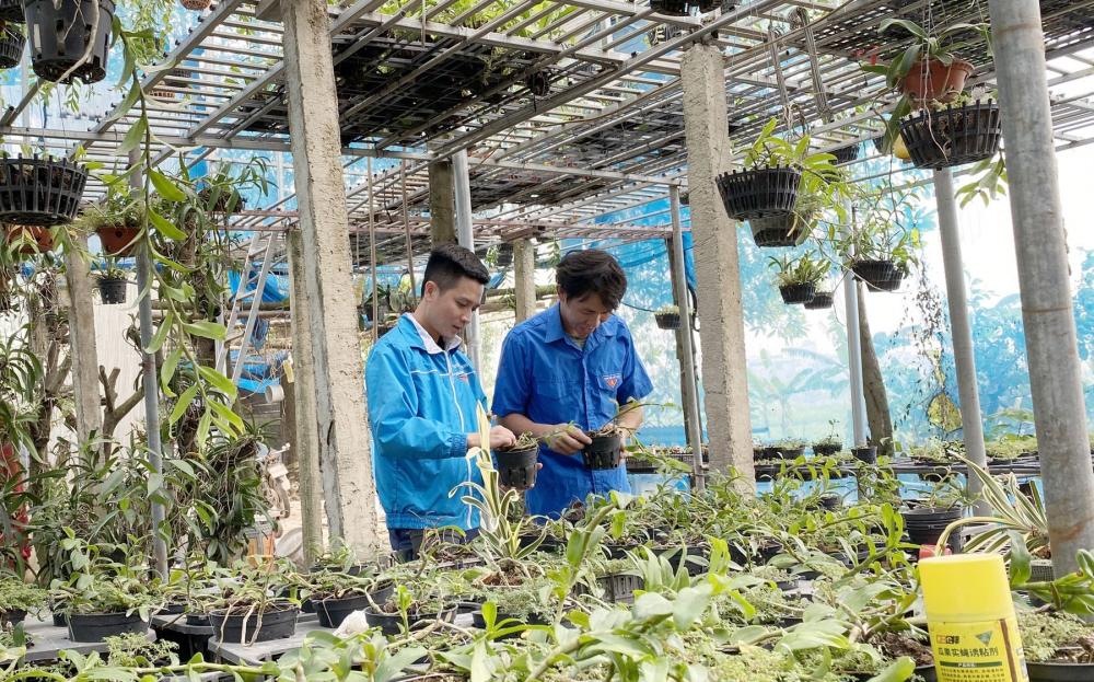 Sức sống mới phủ xanh miền quê Thanh Trì