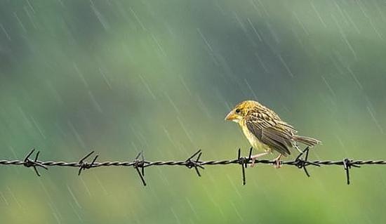 Đi qua cơn mưa giông