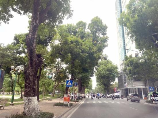 """Bảo vệ những """"lá phổi xanh"""" của Thủ đô"""
