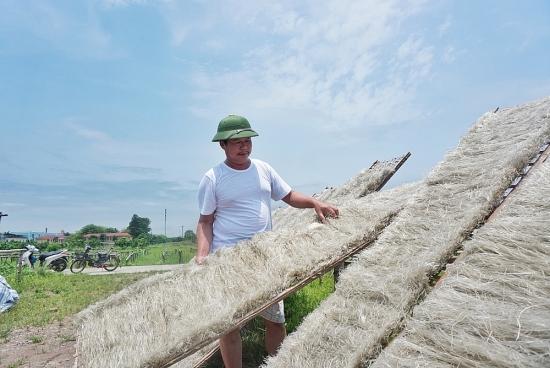 Rộn ràng làng miến Minh Khai