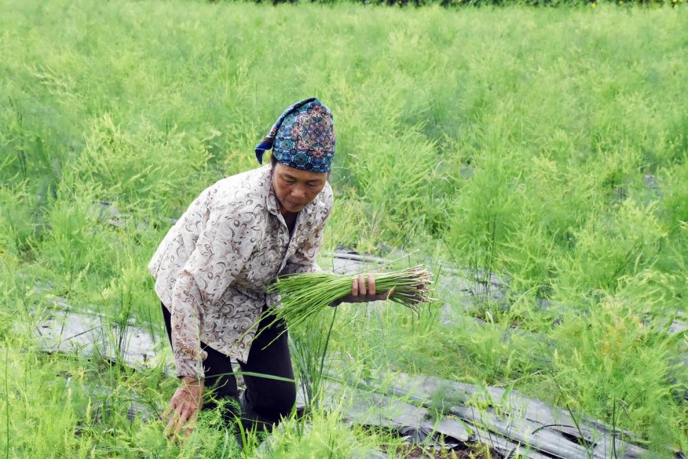 Chuyện những nông dân làm giàu từ nông nghiệp sạch