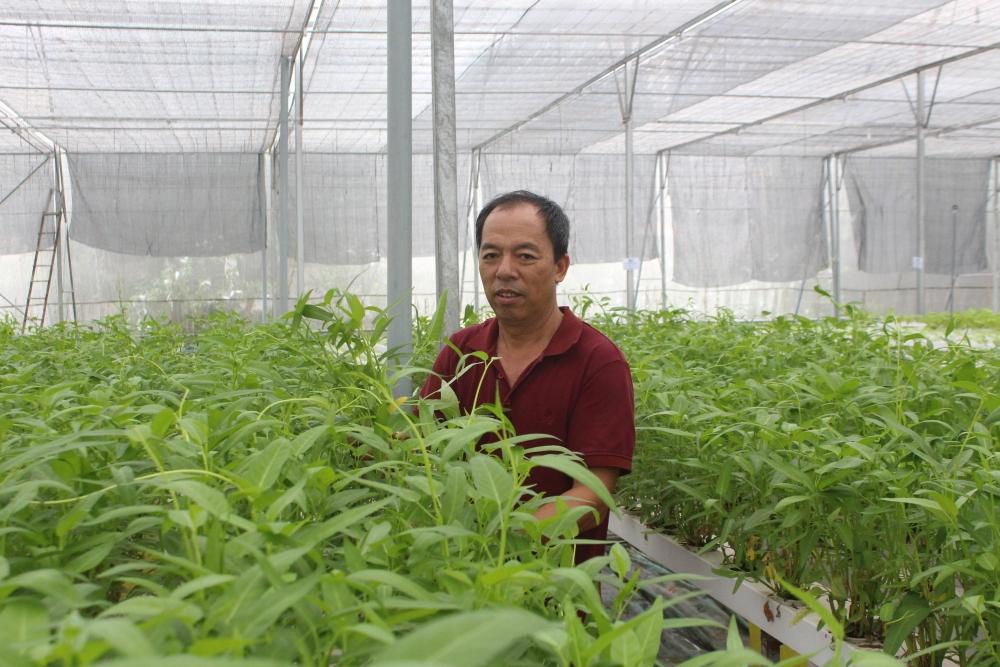 Tăng năng suất từ mô hình nông nghiệp công nghệ cao