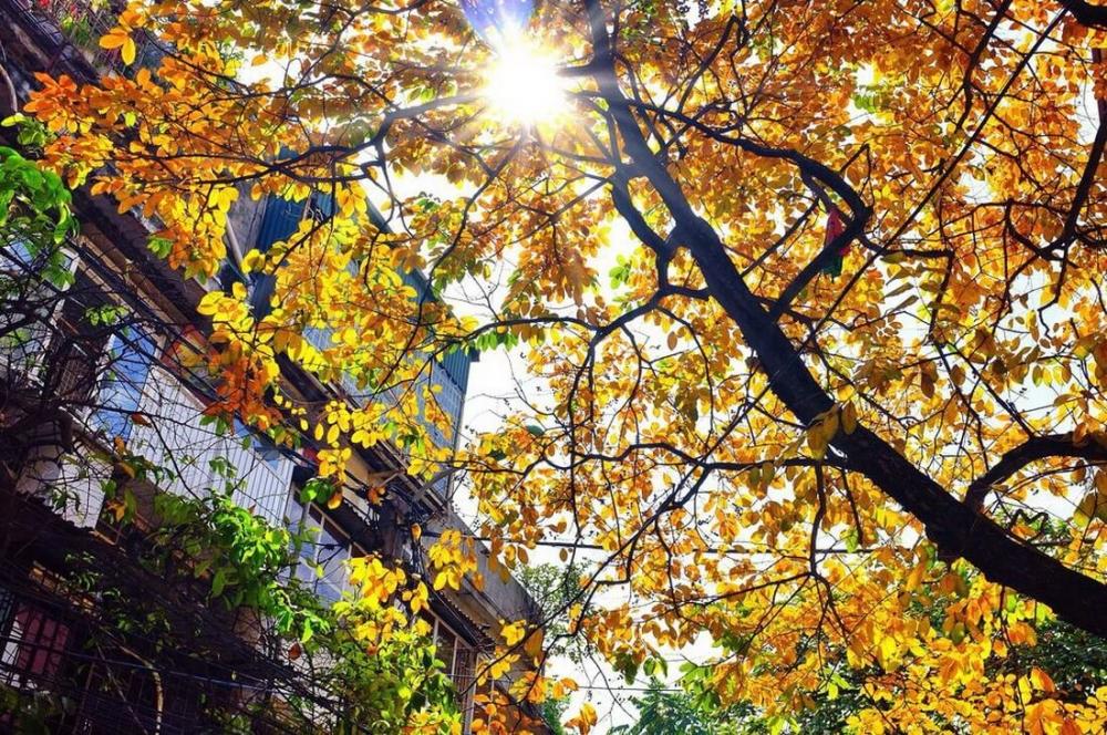 Này tháng Chín, mùa thu về trên phố