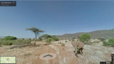 Google Maps có thêm tính năng theo dõi tác động của việc biến đổi khí hậu