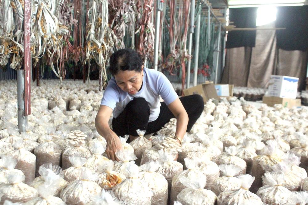 Giảm thiểu ô nhiễm môi sinh… nhờ trồng nấm!